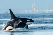 Canadá e Baleias