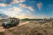 Ikapa Pilanesberg